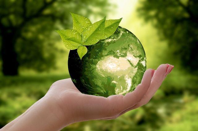 В ДНР стартует экологический конкурс