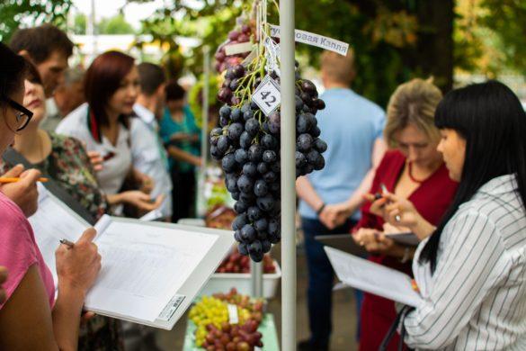 В Республике прошла выставка-конференция «Виноград Донбасса – 2020»