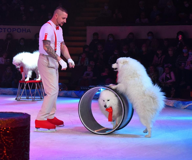 Цирк «Космос» открыл новый сезон ледовым шоу (ФОТО)