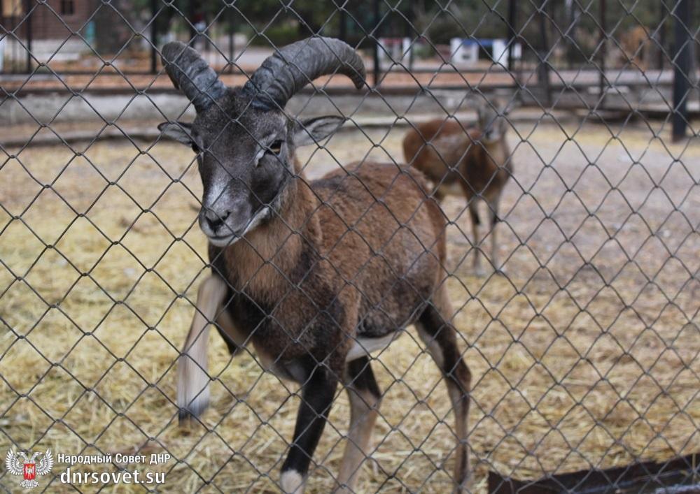 Мы в ответе за тех, кого приручили: Дмитрий Огилец взял на контроль содержание животных в докучаевском зоопарке