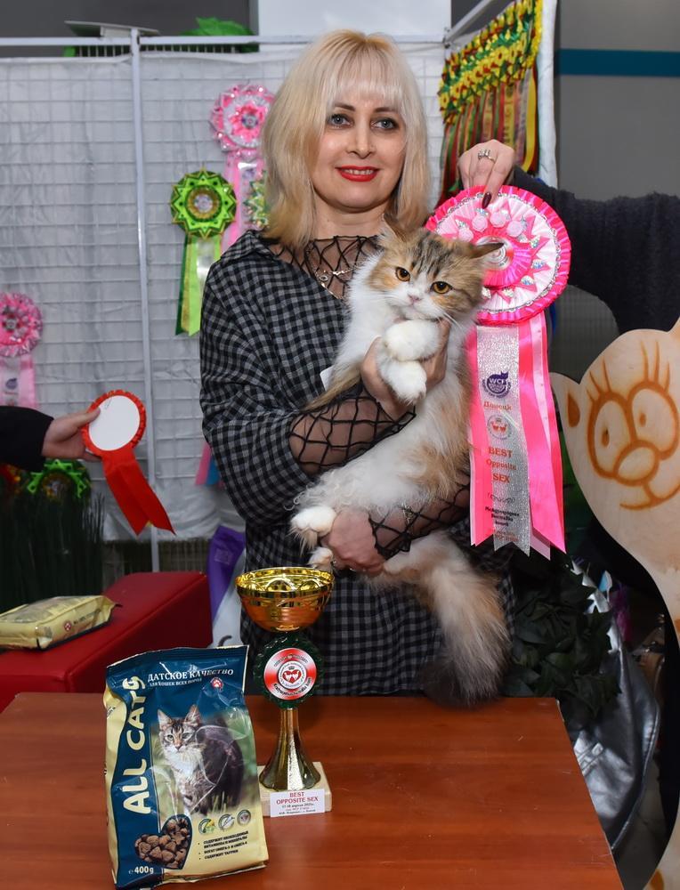 Лучшая кошка в ДНР